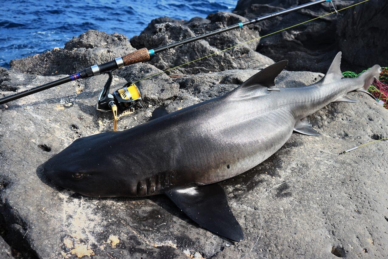 フロータニアで釣りあげられた121cmのサメ。しっかり竿で矯め、殆ど走らせることなくこんな想定外の大物も獲れるブランクパワーとガイドバランス。シングルフットでもガイド数が多くスレッドのコーティングを厚くしているため全く問題なく大物と戦うことができる。