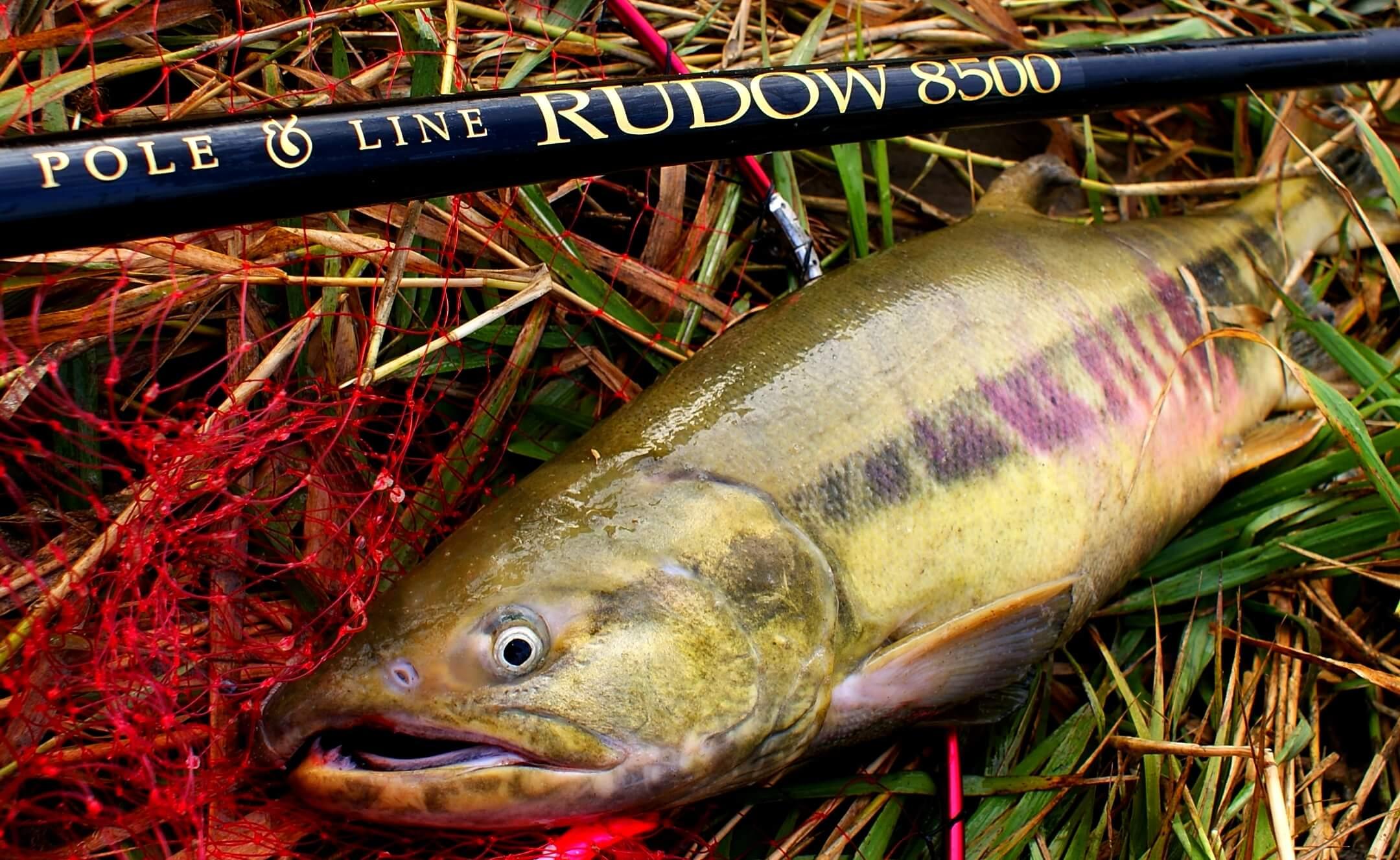 鮭の延べ竿での釣り