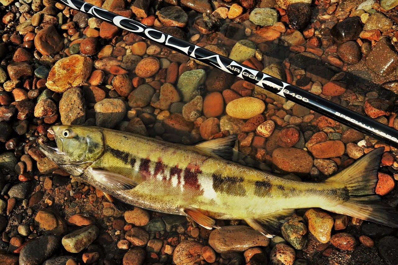エアゴライアス8400 超大物用延べ竿でのサケ釣り