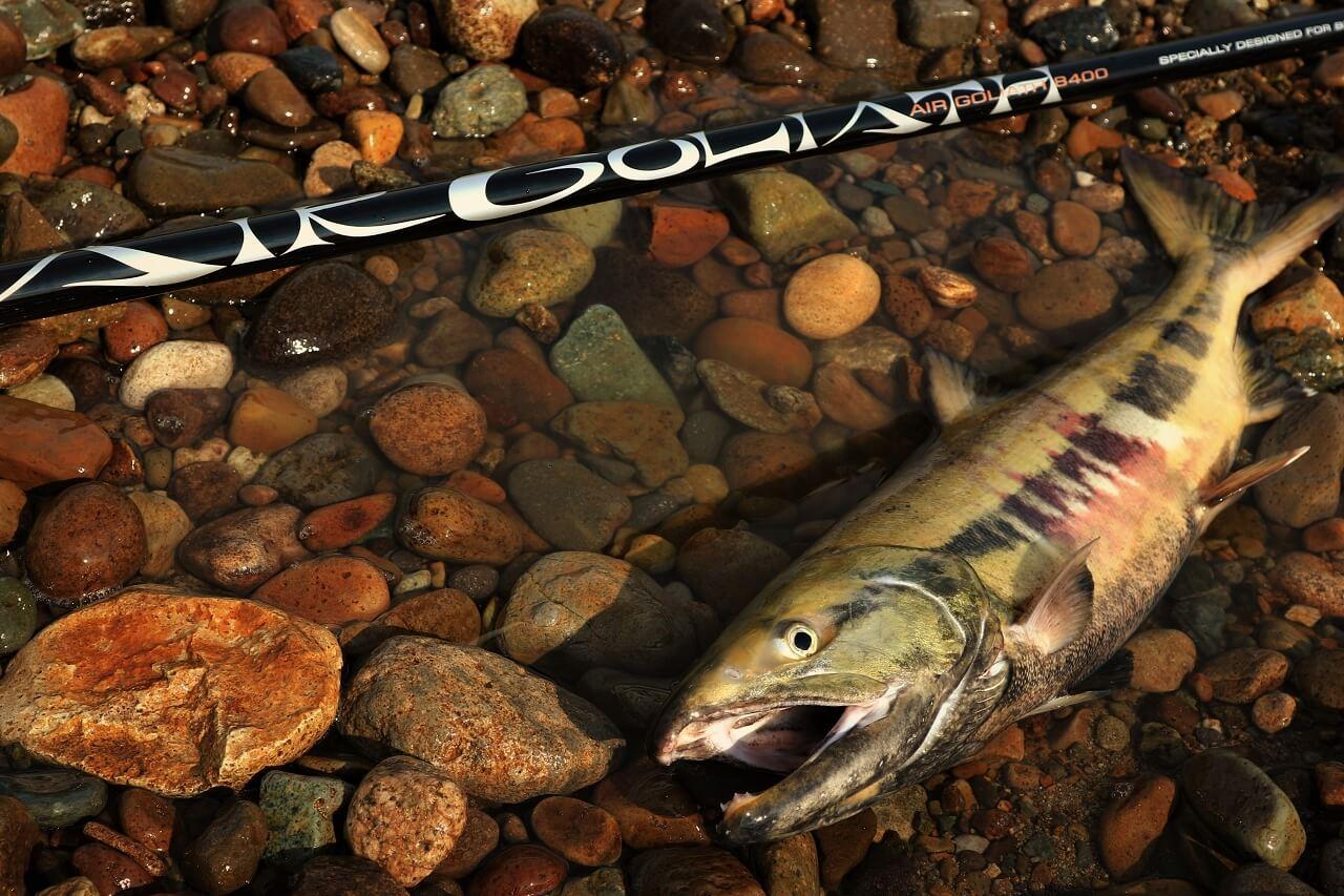 鮭の本流釣り