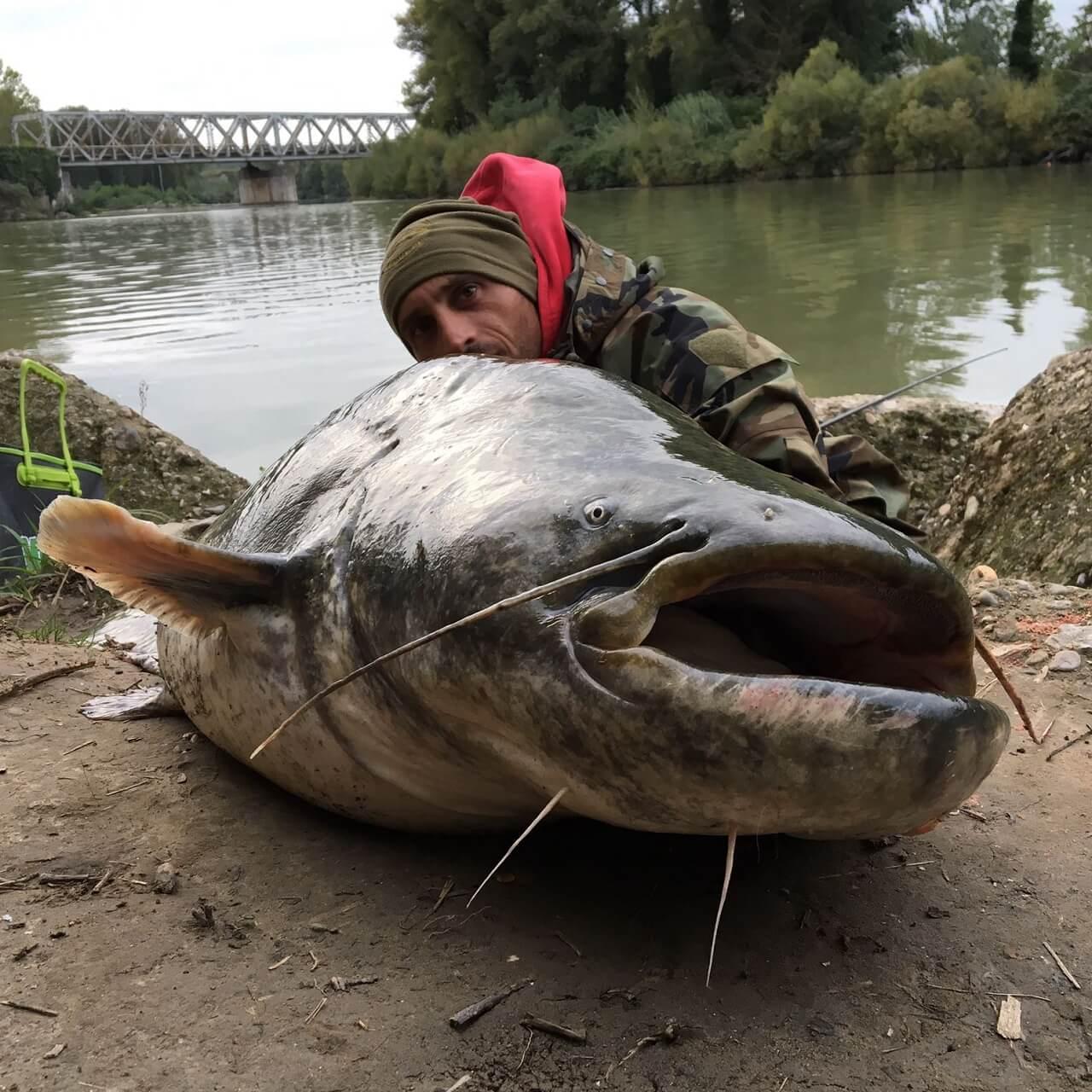 ヨーロッパオオナマズ釣り