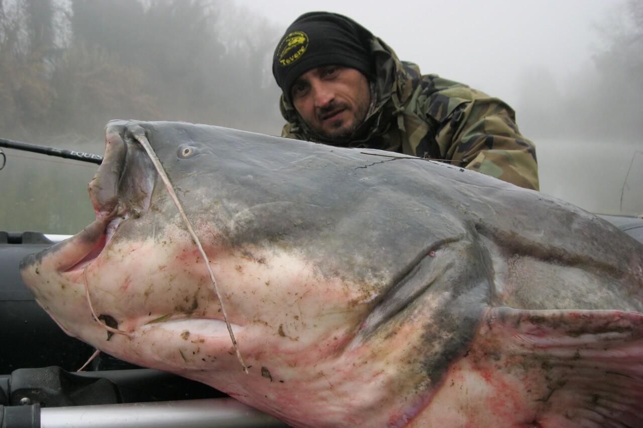 エクエスでヨーロッパオオナマズ釣り