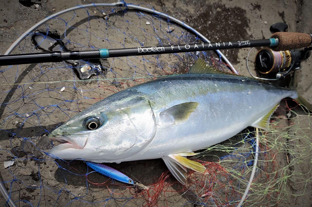 フロータニアで釣り上げられたイナダ